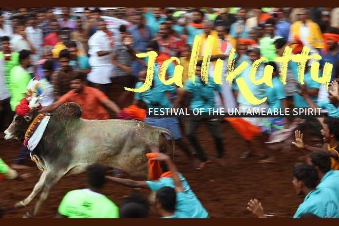 Jallikattu – Festival of the Untameable Spirit, Pickle Media